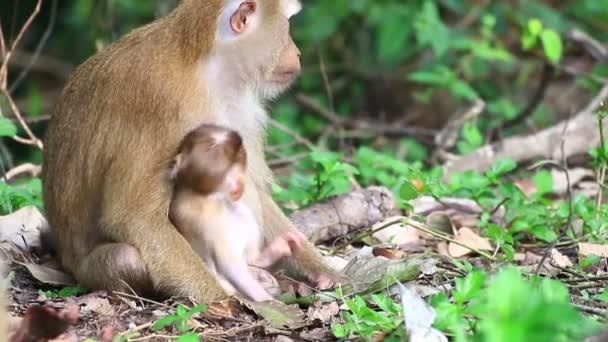 Monkey nursing child.