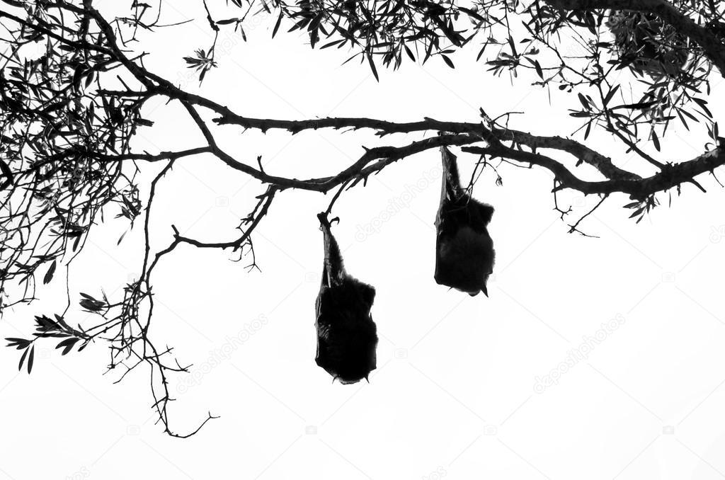 коварная рисунок летучих мышей на дереве вверх ногами приятно