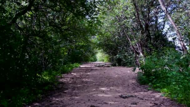 Egy elhagyott úton a Rif-Fort Kronstadt. Kotlin sziget.