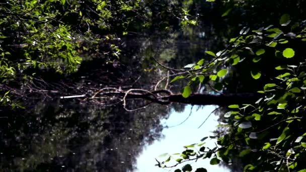 Backwater, a small lake with a wild, dense vegetation around.