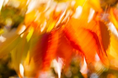 Abstract red and green leaves, blurred 100%