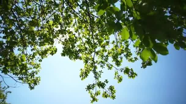 Sole splende attraverso le foglie
