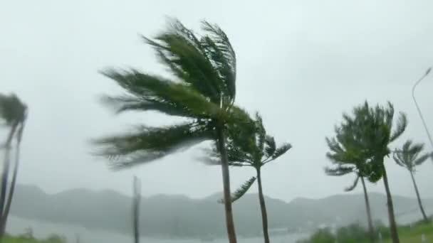 Palmen bei starkem Regen und starkem Wind. Tropensturm-Konzept. Gedreht mit einer Action-Kamera. Mit natürlichem Klang