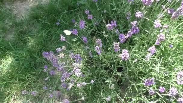 Farfalla su un bei fiori blu