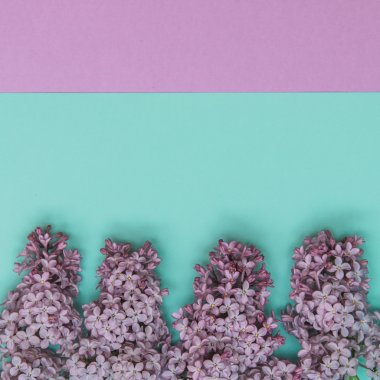 Lilac flowers on pastel background