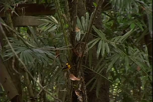 Finch a kolibřík na větve stromu