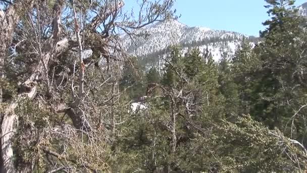 horská krajina stromy