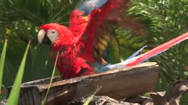 Lustige bunte Papageien im zoo