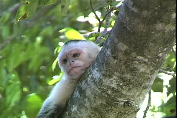 monkey on tree branches