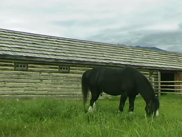 Koně jíst trávu na louce