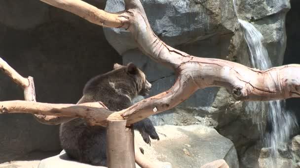 grizzly bear near Waterfall in zoo