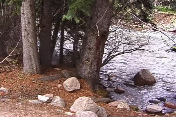 Potok v proudu řeky