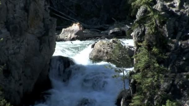 Mountain Stream in Yellowstone National Park