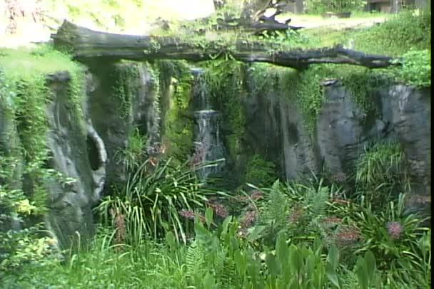Bush Gardens v zábavním parku