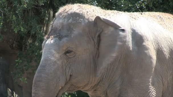 Elefánt az állatkertben-új Orlans