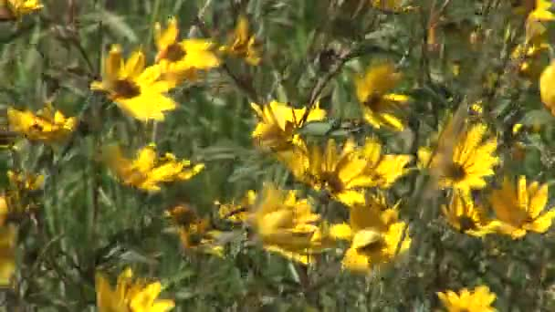 Zlaté kytice v poli