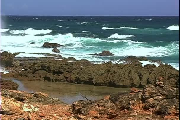 Ironshore sullisola di Aruba