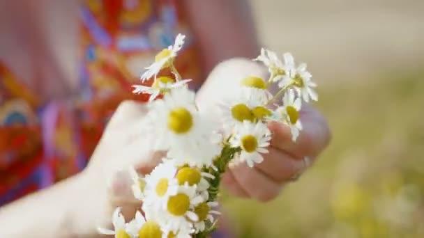 Žena v červených šatech shromažďuje věnec sedmikrásky v lučních květin, velmi zblízka
