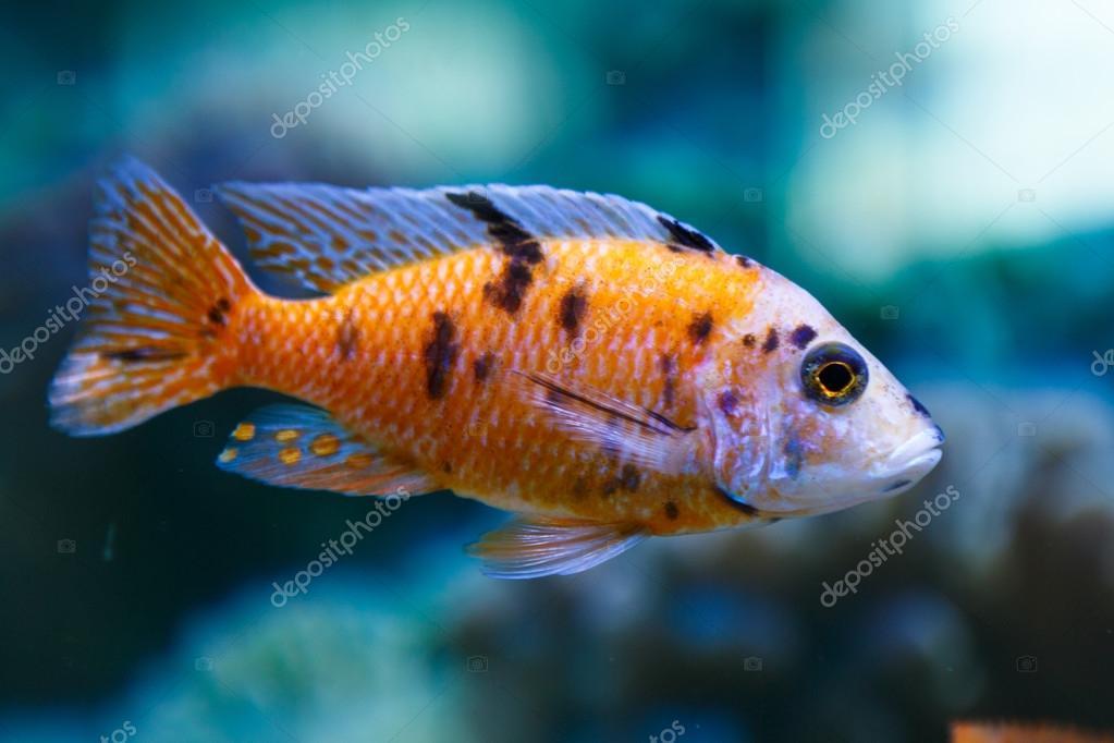 Poissons d un aquarium photographie tankist41 114284838 - Poisson shark aquarium ...