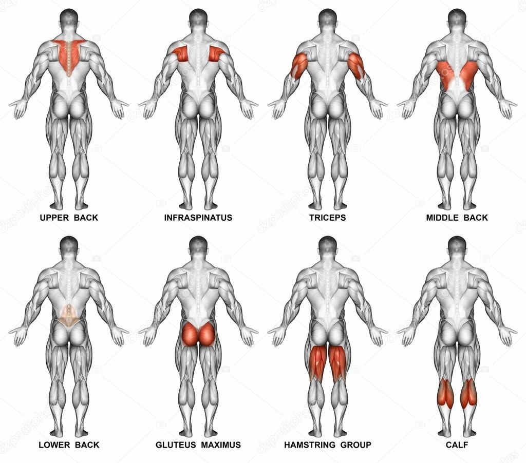 Back Projection Of The Human Body Stockfoto Print4readyyahoo