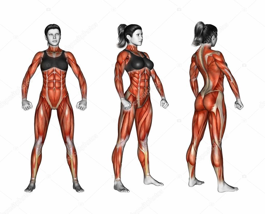 Projektion des menschlichen Körpers — Stockfoto © print4ready@yahoo ...