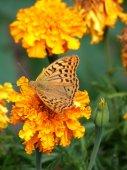 Fényképek Betterfly egy virág