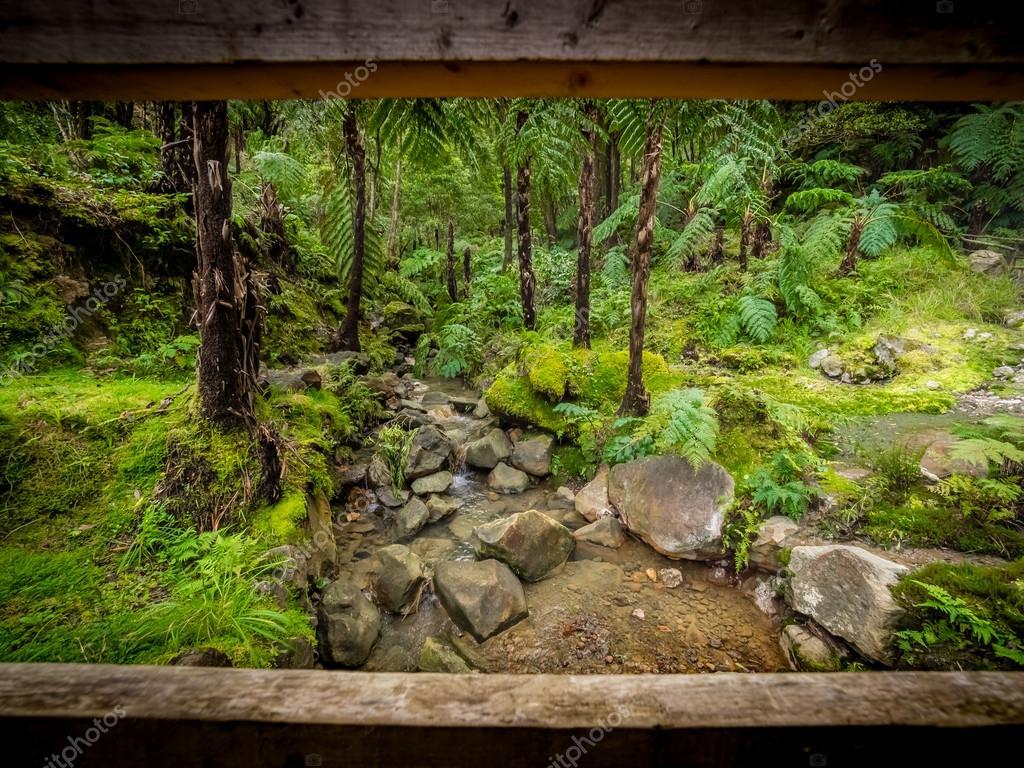 Tropisch Bos In Sao Miguel Stockfoto Pawopa3336 116405568