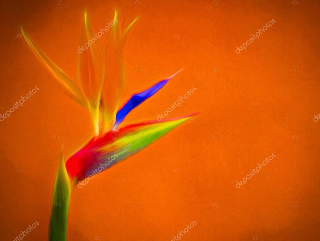 Fleur Oiseau Du Paradis Photographie Pawopa3336 C 120068240
