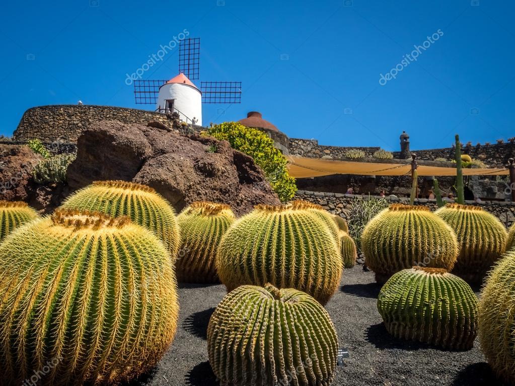 Cactus Garden In Lanzarote Stock Photo C Pawopa3336 120277890
