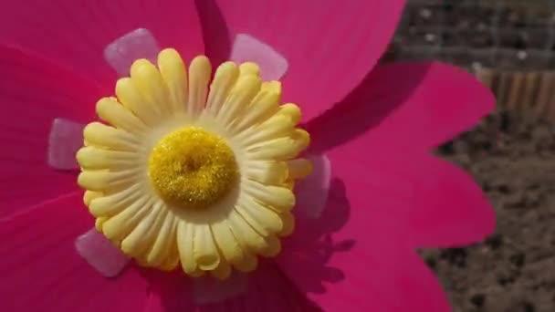 Blume Windrad dreht sich schnell