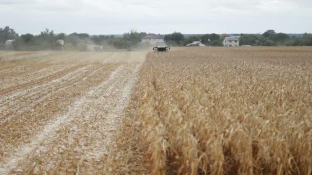 Kukuřice zrno kombajn sbírat kukuřici na farmfield