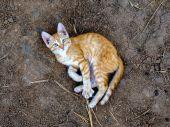 Fotografie malé oranžové kotě hraje na zemi