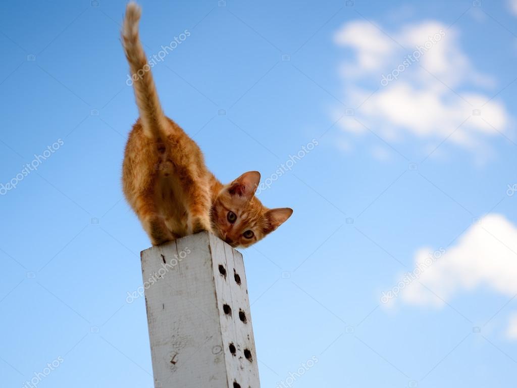 the little orange kitten plays column