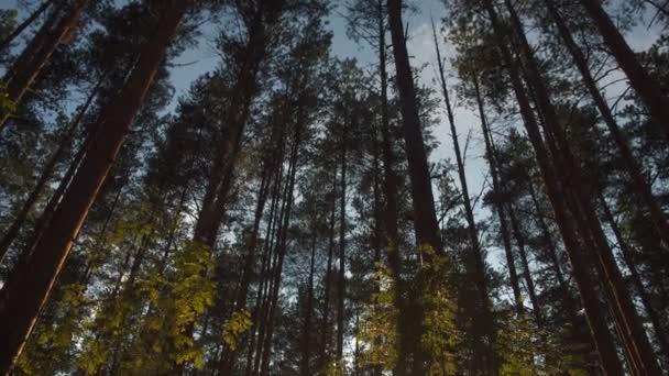 Západ slunce v létě borový les
