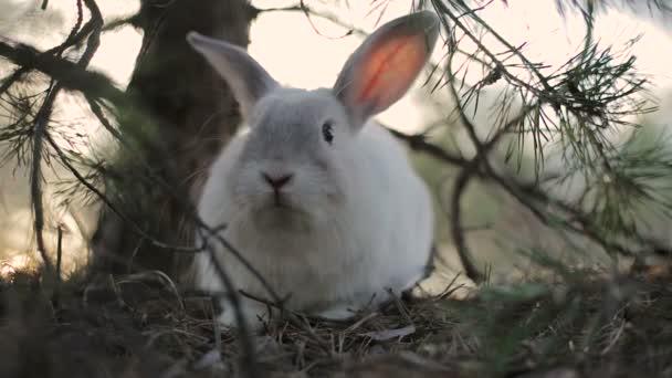 weißes Kaninchen im Sommerwald