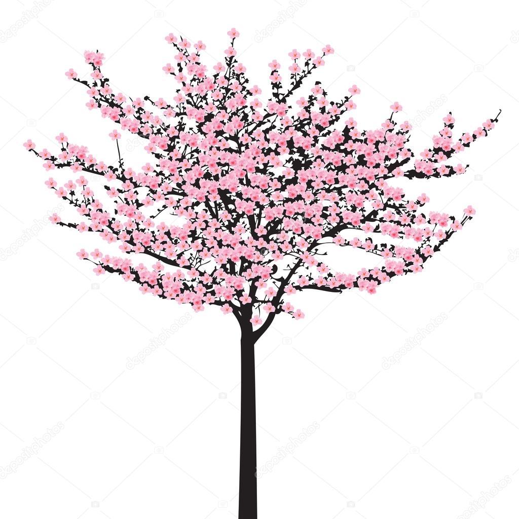 Animado Arbol De Cerezo Blanco Y Negro Plena Floración Rosa