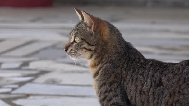 přetrvávající pohledem kočka