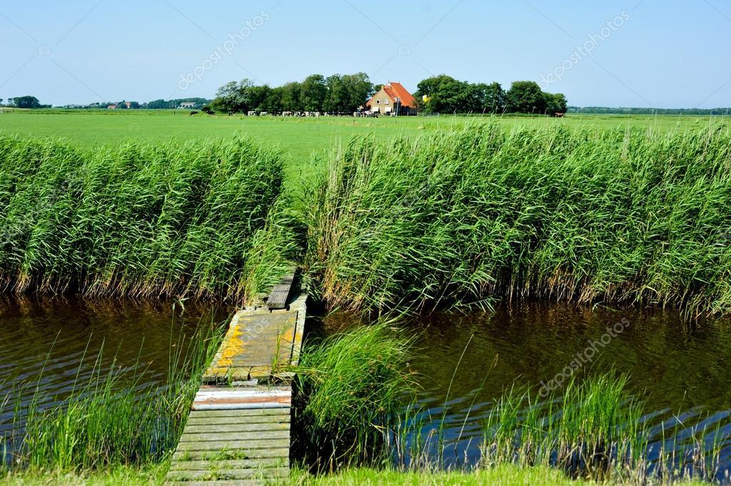 オランダ島アーメラント島から草...