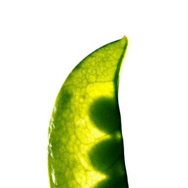 Fresh pea pod, isolated