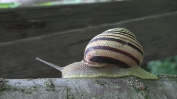 beautiful snail crawl forest home