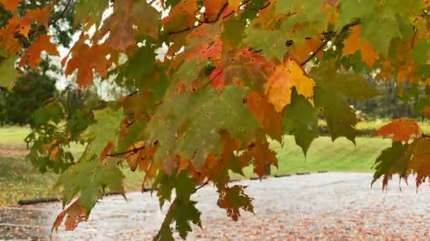 Krásné podzimní listí se vlní ve vánku v podzimním dni.