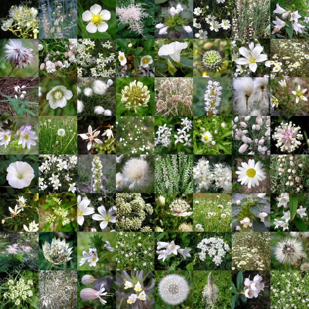 White Mountain Flowers Patchwork Stock Photo Nlshop 117110956