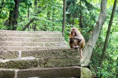 monkey with candy wrappers in the natural forest of China