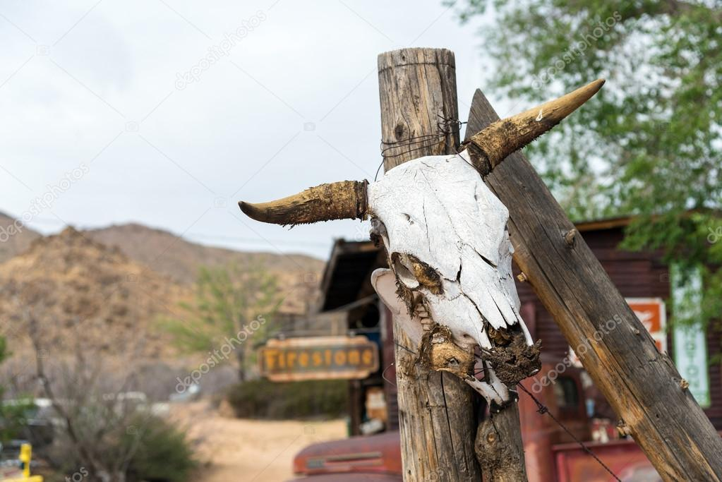 Kuh Kopf Skelett — Stockfoto © EkaterinaElagina #115965866