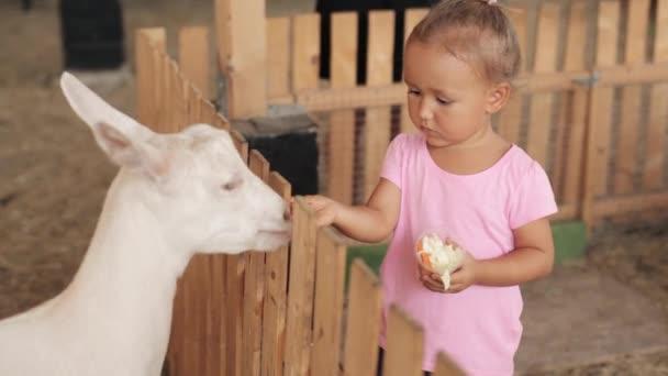Roztomilá holčička krmení koz na farmě