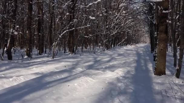 Krásná procházka zimním lesem. Stromy, větve a keře ve sněhu. Všude sníh. Stezka v lese je pokryta sněhem.