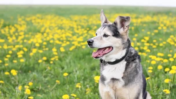 pes na poli s květinami