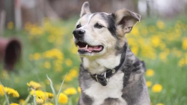 Porträt eines schönen jungen schwarz-weißen Hundes