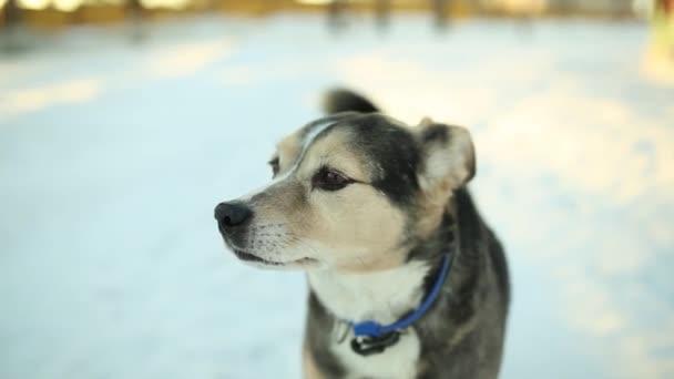 Hund im Winter im Park