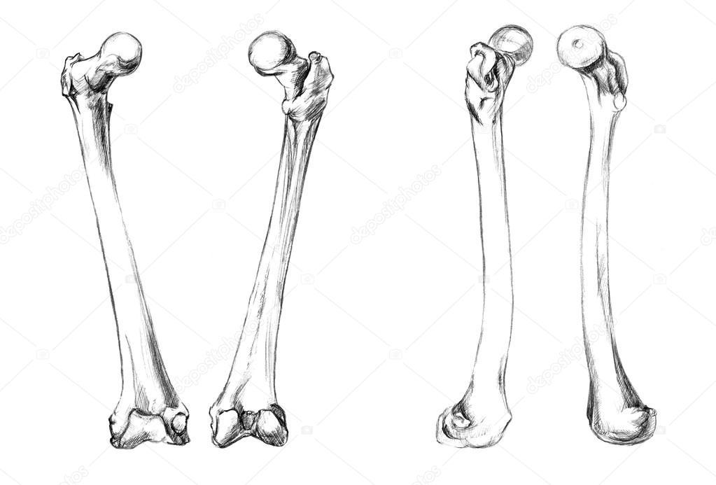 Bones of legs (femur) — Stock Photo © PSArtDesignStudio #123523598